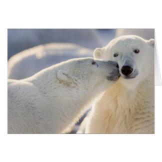 Canada, Manitoba, Hudson Bay, Churchill. Polar Greeting Card
