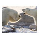 Canada, Manitoba, Hudson Bay, Churchill. Two Postcard