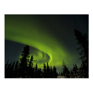 Canada, Manitoba. View of aurora borealis and Postcard