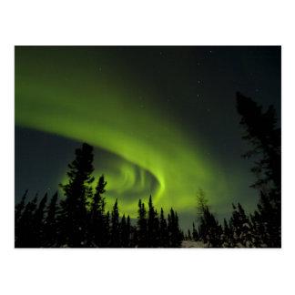 Canada Manitoba View of aurora borealis and Postcard