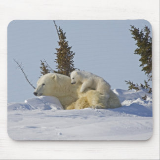 Canada, Manitoba, Wapusk National Park. Polar 2 Mouse Mat