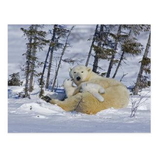 Canada Manitoba Wapusk National Park Polar 5 Post Cards