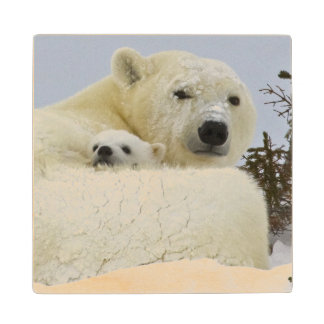 Canada, Manitoba, Wapusk National Park. Polar 8 Wood Coaster