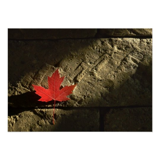Canada Maple Leaf Poster