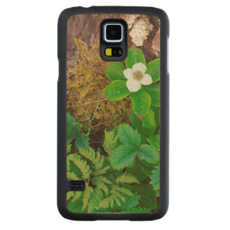 Canada, New Brunswick, ,  2 Carved Maple Galaxy S5 Case