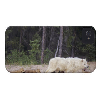 Canada, Northwest Territories, Great Slave Lake. iPhone 4 Cover