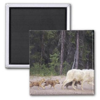 Canada, Northwest Territories, Great Slave Lake. Square Magnet