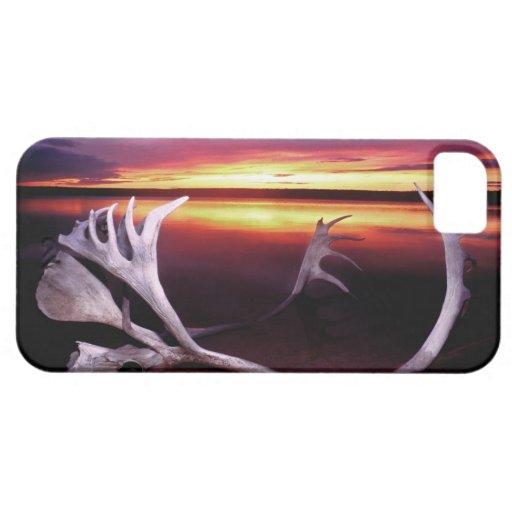Canada, Northwest Territories, Whitefish Lake. iPhone 5 Covers