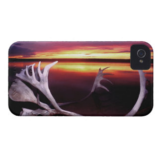 Canada, Northwest Territories, Whitefish Lake. iPhone 4 Case-Mate Case