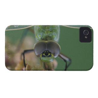 Canada, Ontario, close-up of Green Darner on Blackberry Case