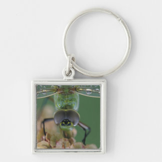 Canada, Ontario, close-up of Green Darner on Keychains