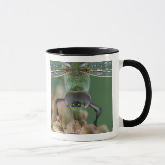 Canada, Ontario, close-up of Green Darner on Mug