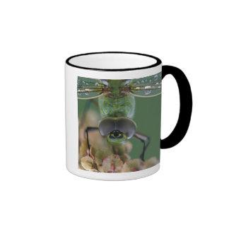 Canada, Ontario, close-up of Green Darner on Mugs