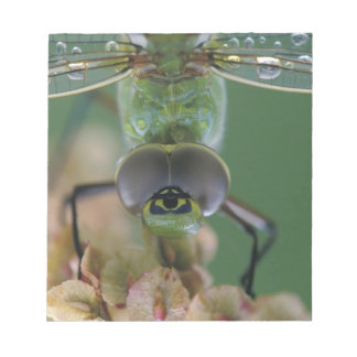Canada, Ontario, close-up of Green Darner on Notepads