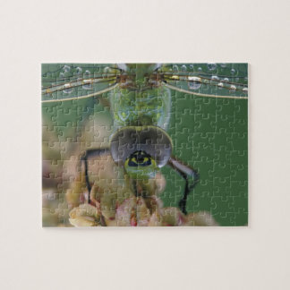Canada, Ontario, close-up of Green Darner on Puzzles