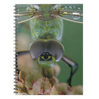Canada, Ontario, close-up of Green Darner on Spiral Note Books