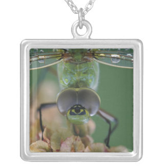 Canada, Ontario, close-up of Green Darner on Square Pendant Necklace
