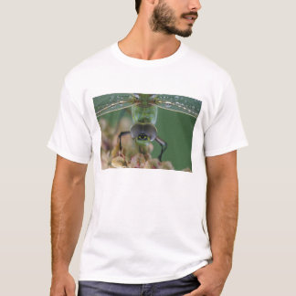 Canada, Ontario, close-up of Green Darner on T-Shirt