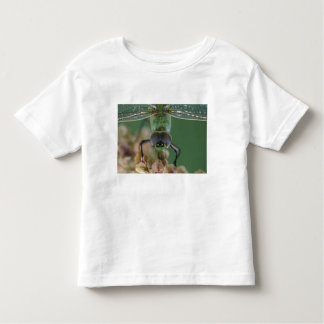 Canada, Ontario, close-up of Green Darner on Toddler T-Shirt