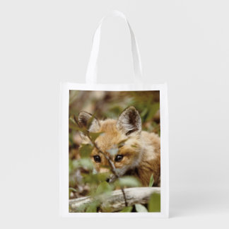Canada, Point Pelee National Park. Young red fox