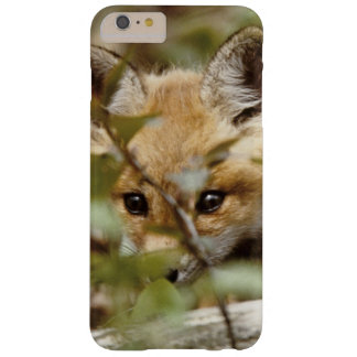 Canada, Point Pelee National Park. Young red fox Barely There iPhone 6 Plus Case