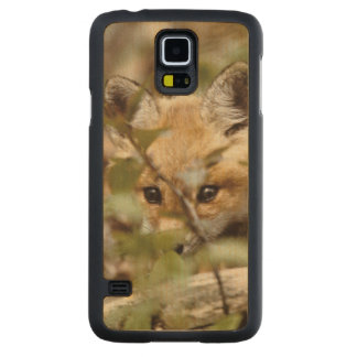 Canada, Point Pelee National Park. Young red fox Carved Maple Galaxy S5 Case