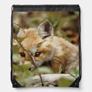 Canada, Point Pelee National Park. Young red fox Drawstring Bag