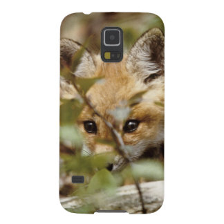 Canada, Point Pelee National Park. Young red fox Galaxy S5 Cover