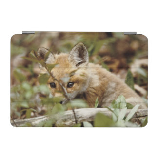 Canada, Point Pelee National Park. Young red fox iPad Mini Cover