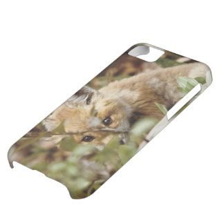 Canada, Point Pelee National Park. Young red fox iPhone 5C Case