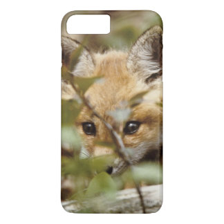 Canada, Point Pelee National Park. Young red fox iPhone 8 Plus/7 Plus Case