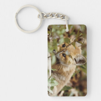 Canada, Point Pelee National Park. Young red fox Key Ring
