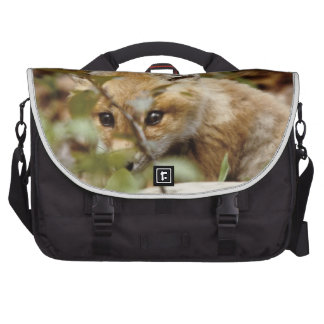 Canada, Point Pelee National Park. Young red fox Computer Bag