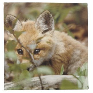 Canada, Point Pelee National Park. Young red fox Napkin