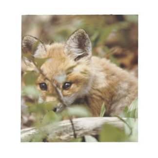 Canada, Point Pelee National Park. Young red fox Notepad