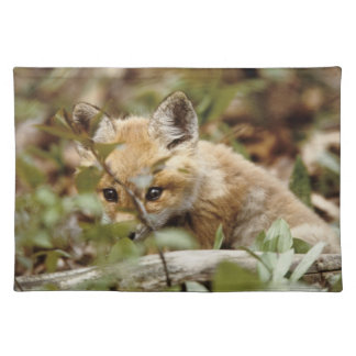 Canada, Point Pelee National Park. Young red fox Placemat
