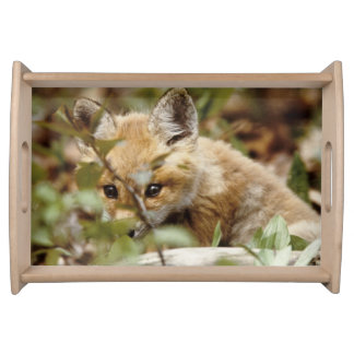 Canada, Point Pelee National Park. Young red fox Serving Tray