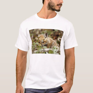 Canada, Point Pelee National Park. Young red fox T-Shirt