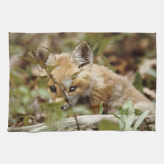 Canada, Point Pelee National Park. Young red fox Tea Towel