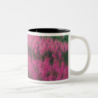Canada, Quebec, Gaspe. Purple Lythrum Flowers, Two-Tone Coffee Mug