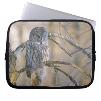 Canada, Quebec. Great gray owl perched on tree Laptop Sleeve