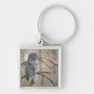 Canada, Quebec. Great gray owl perched on tree Silver-Colored Square Key Ring