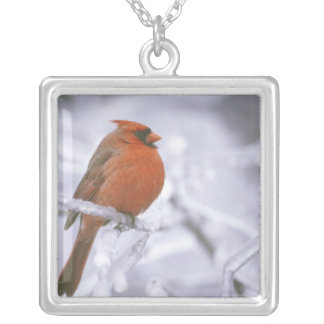 Canada, Quebec. Male northern cardinal on limb Silver Plated Necklace