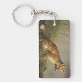 Canada, Quebec. Red fox cub at sunrise. Credit Key Ring