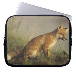 Canada, Quebec. Red fox cub at sunrise. Credit Laptop Sleeve