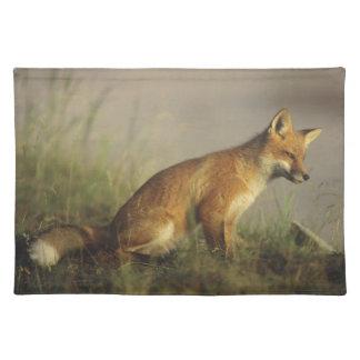 Canada, Quebec. Red fox cub at sunrise. Credit Placemat
