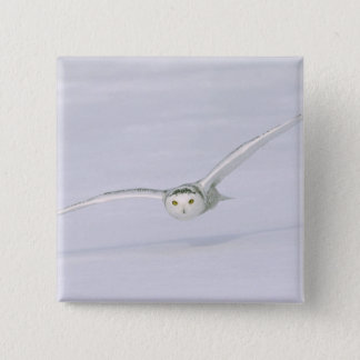 Canada, Quebec. Snowy owl flies low over snow. 15 Cm Square Badge