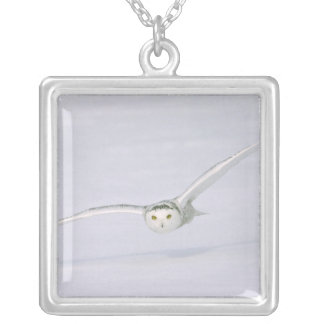 Canada, Quebec. Snowy owl flies low over snow. Silver Plated Necklace
