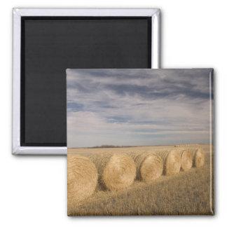 Canada, Saskatchewan, Craik: Hayrolls / Autumn Magnet