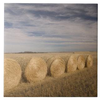 Canada, Saskatchewan, Craik: Hayrolls / Autumn Tile